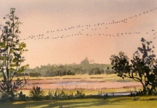 Birds Over the Marsh