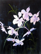 Marcia's Orchids