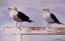 Seagulls Resting #2