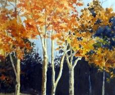 Virginia Trees